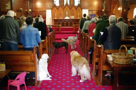Pet Sunday St Andrews Church Cambridge NZ