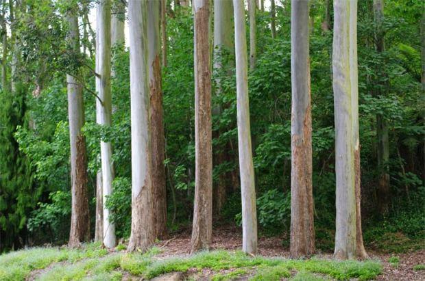 Lake Te Ko Uto trees 16 November 2008