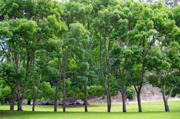 Lake Te Ko Utu trees 16 November 2008