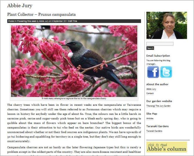 Abbie Jury | Tikorangi the Jury garden