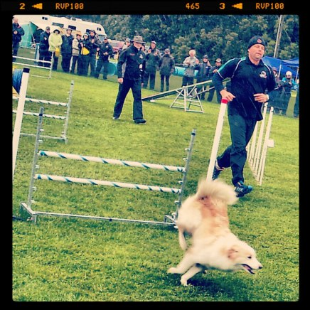New Zealand Dog Agility Championship