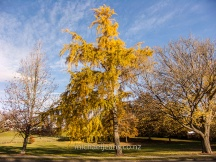 Lindsay Park, Leamington