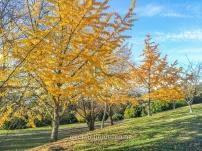 Gil Lumb Park, Leamington