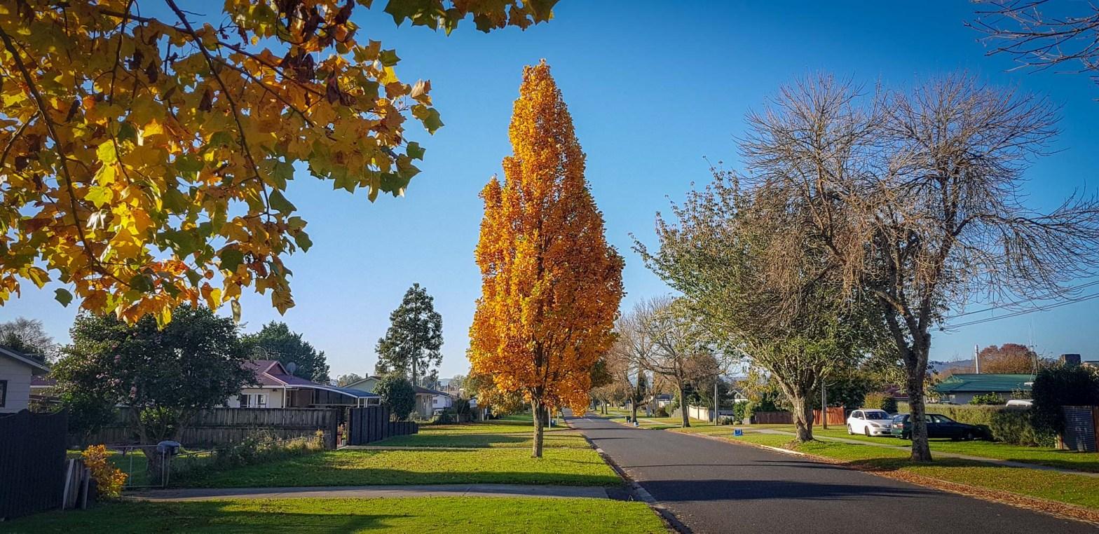 Burns Street, Leamington, Waikato, New Zealand.