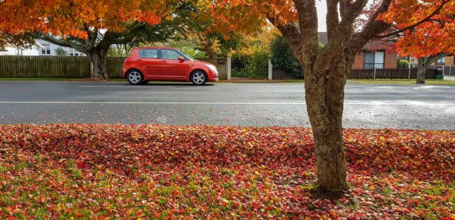 Autumn, Hamilton Road, Cambridge. New Zealand