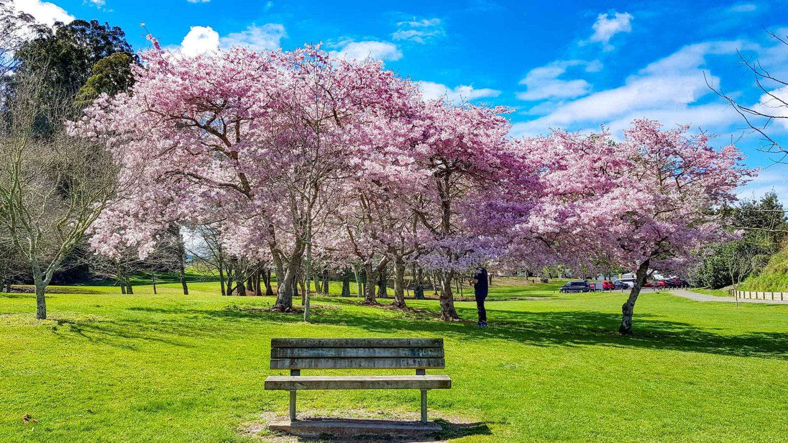 Cambridge Domain, Waikato, New Zealand