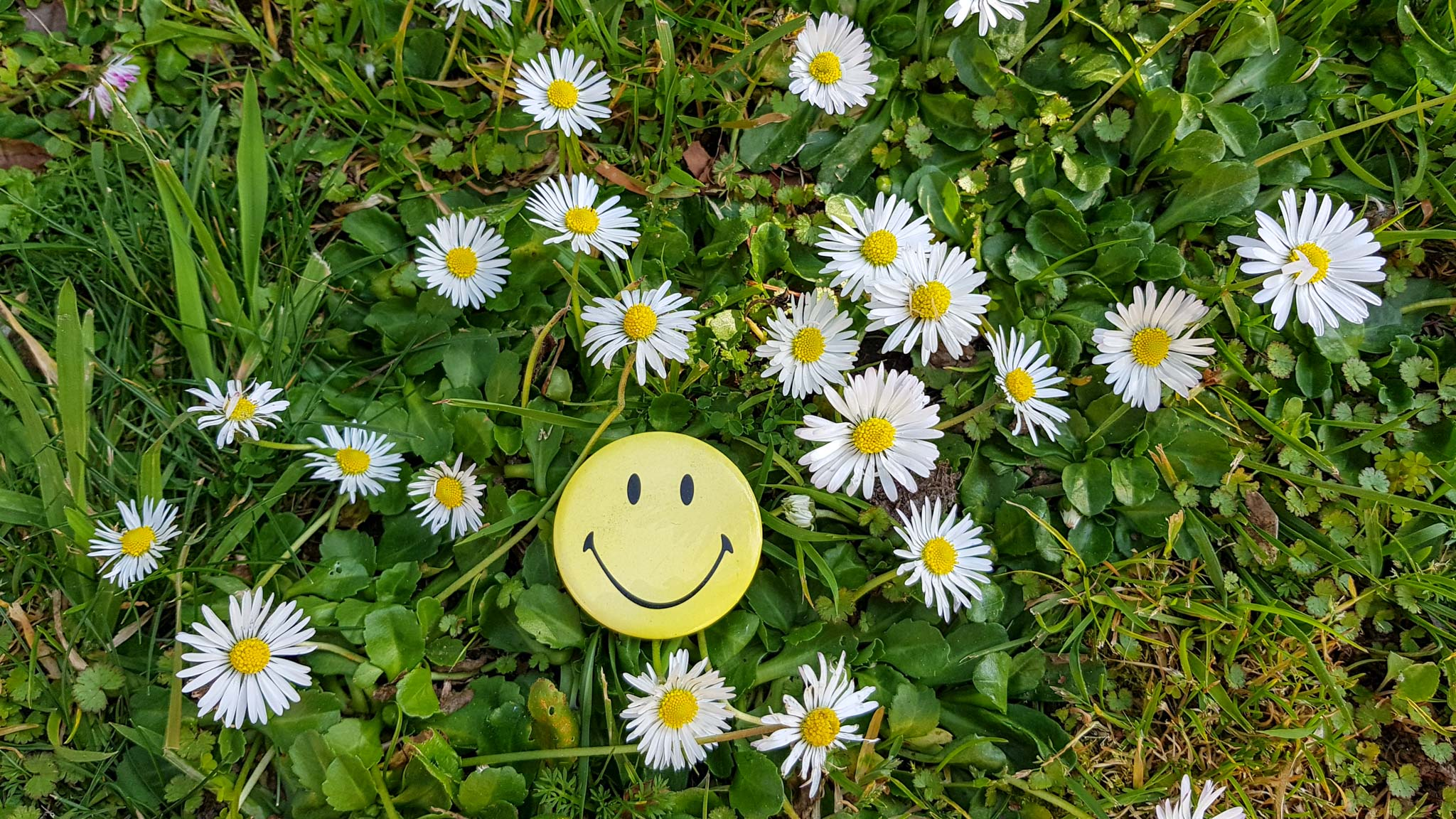 smiley face & daisies / Friday postscript 14.9.2018 / 109