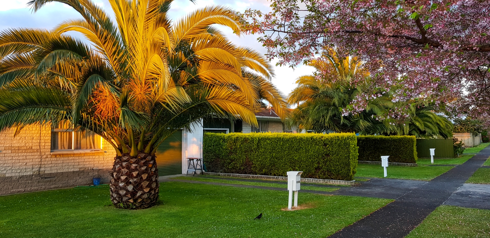 Burns & Byron corner, Leamington, Waikato