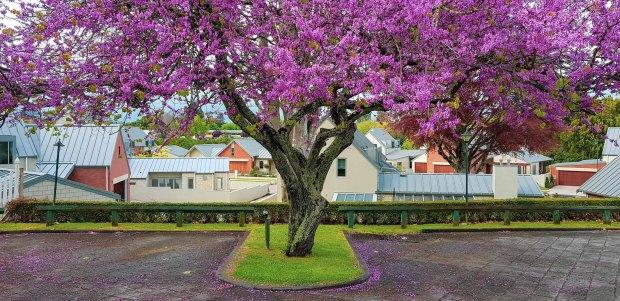 Victoria & Le Quesnoy, Cambridge, New Zealand
