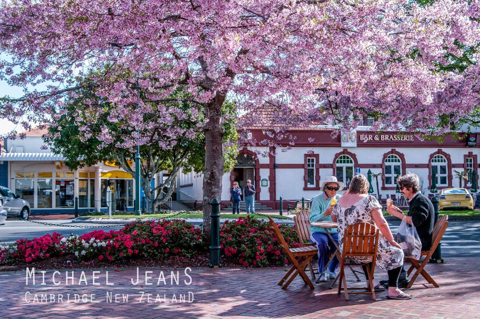Cherry blossom Victoria Street Cambridge New Zealand